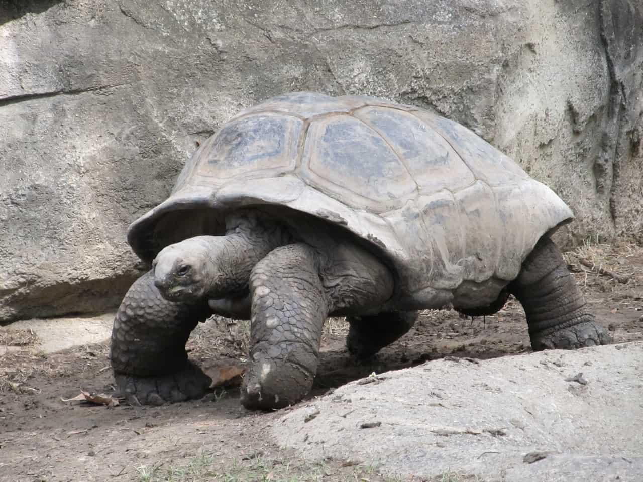 Hare or Tortoise?