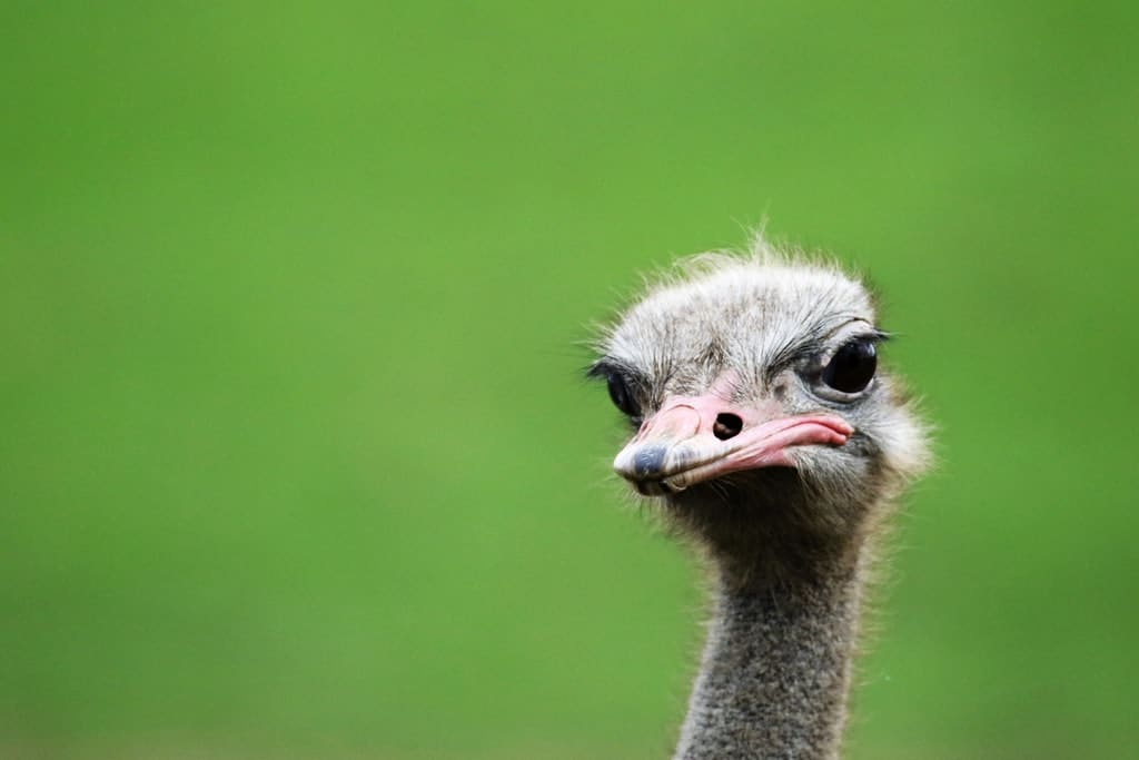 Don't be the Cashflow Ostrich